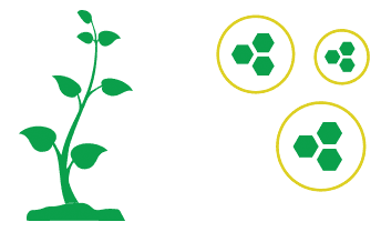 An image showcasing the science behind MustGrow's positive effect on crop growth.