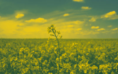 MustGrow Announces Canola Clubroot Test Results