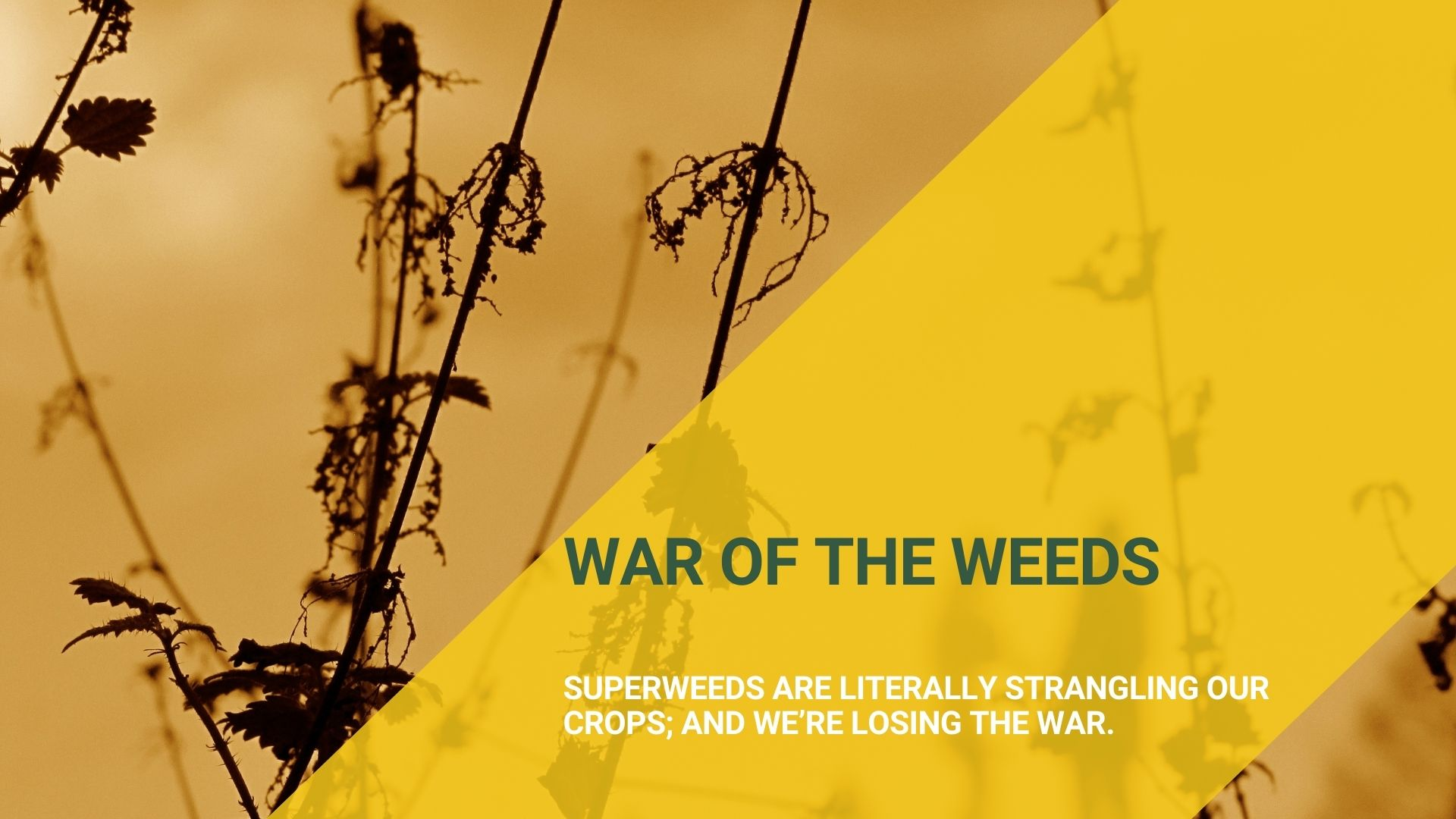 Weeds are strangling our crops MustGrow has the solution